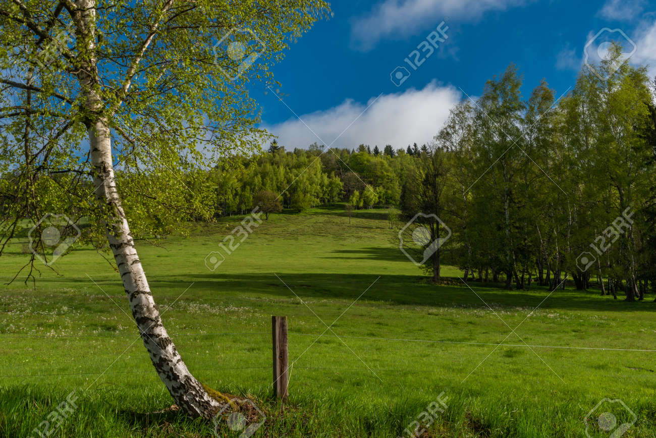 Morning near Nejdek town with fresh green pasture land after night rain - 169616535