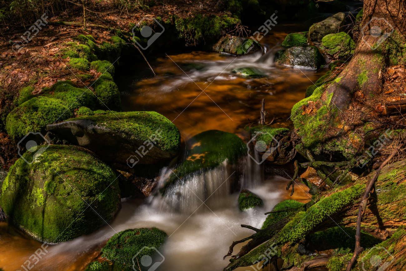 Skrivan color creek in Krusne mountains in spring morning after cold rain - 169616621