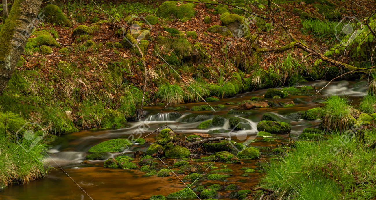 Skrivan color creek in Krusne mountains in spring morning after cold rain - 169798886