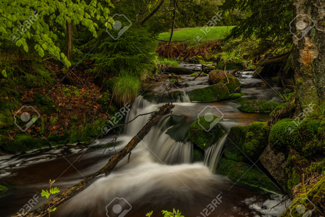 Skrivan color creek in Krusne mountains in spring morning after cold rain - 169798885