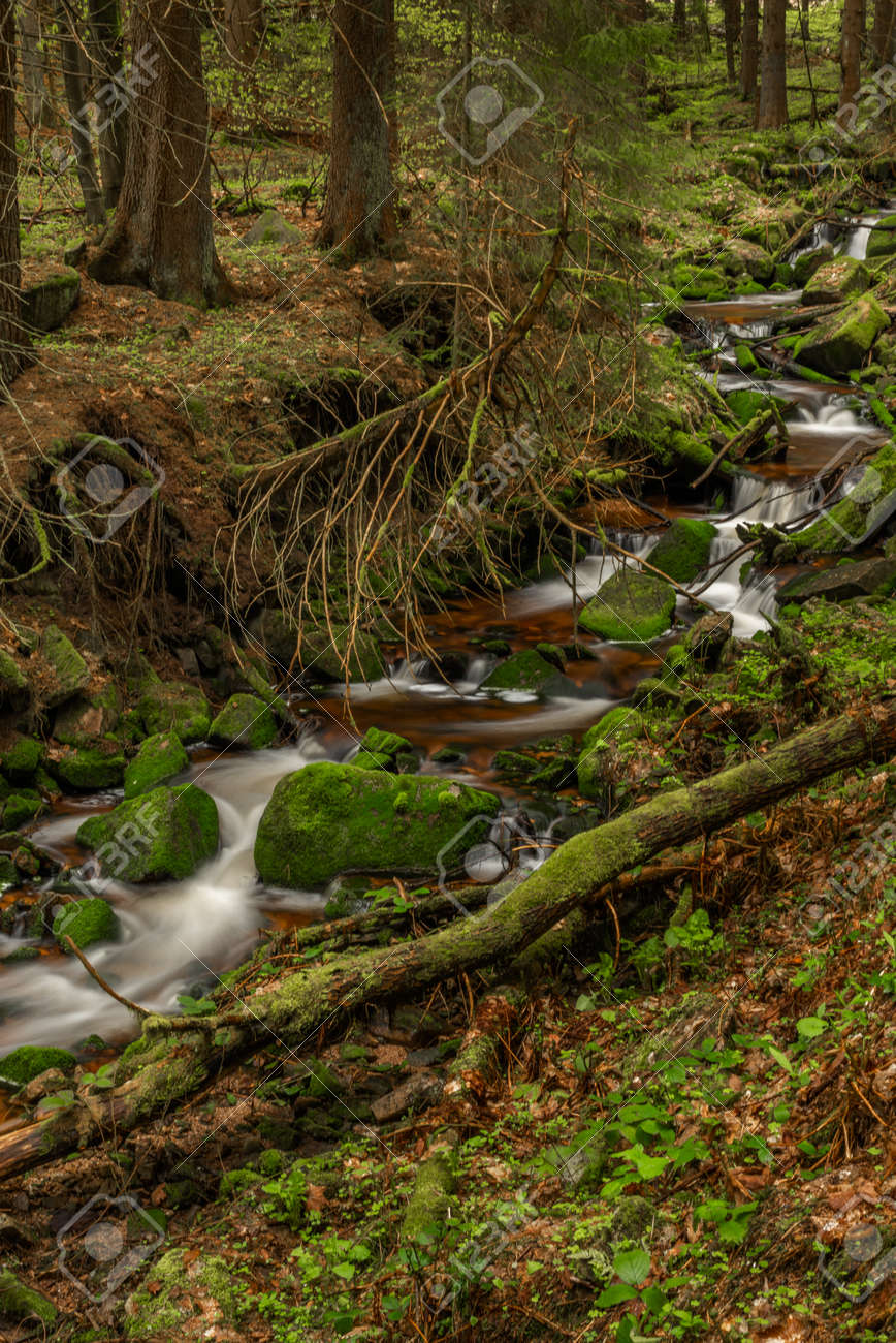 Skrivan color creek in Krusne mountains in spring morning after cold rain - 170005008