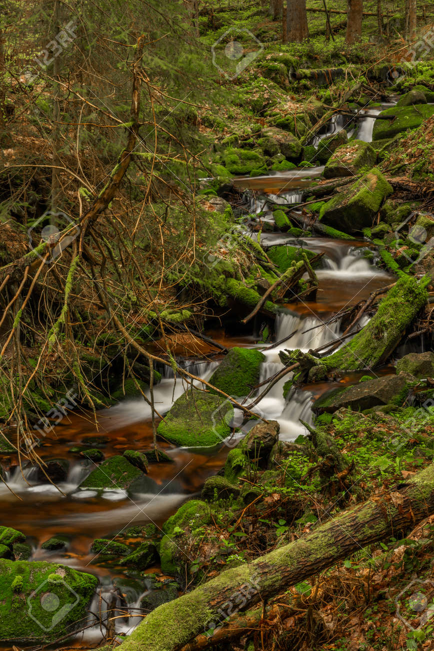 Skrivan color creek in Krusne mountains in spring morning after cold rain - 170005009