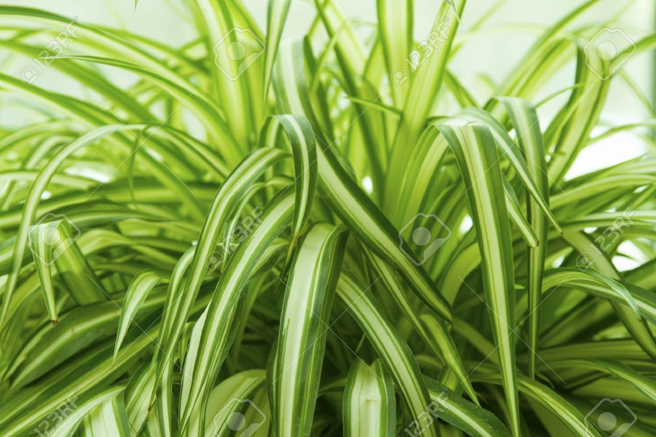 plantas de interior verdes top - Plantas Verdes De Interior