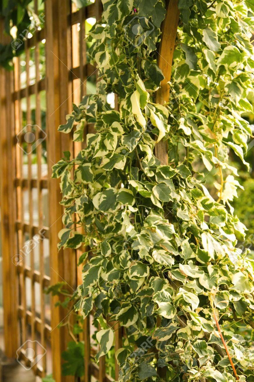 Best Decorative Wall Trellis Photos - The Wall Art Decorations ...