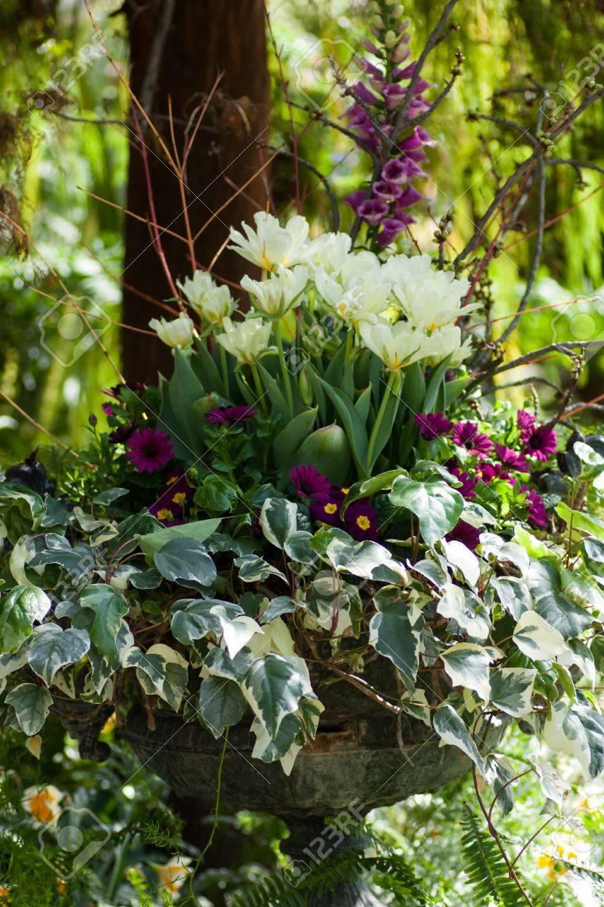 Schöne Blumen Und Pflanzen In Einem Großen Topf In Den Garten