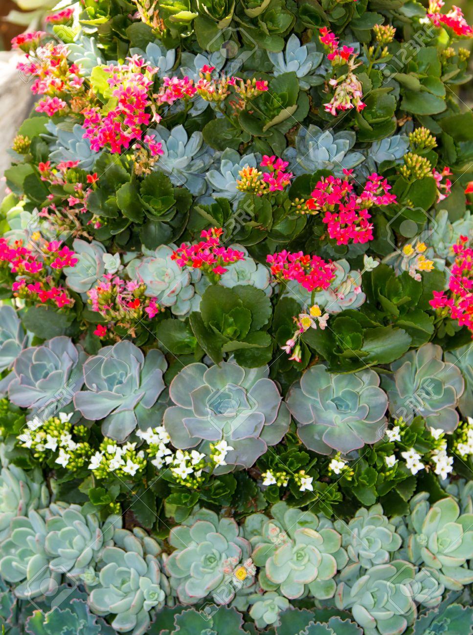 Una Buena Disposicion De Una Variedad De Plantas Suculentas En