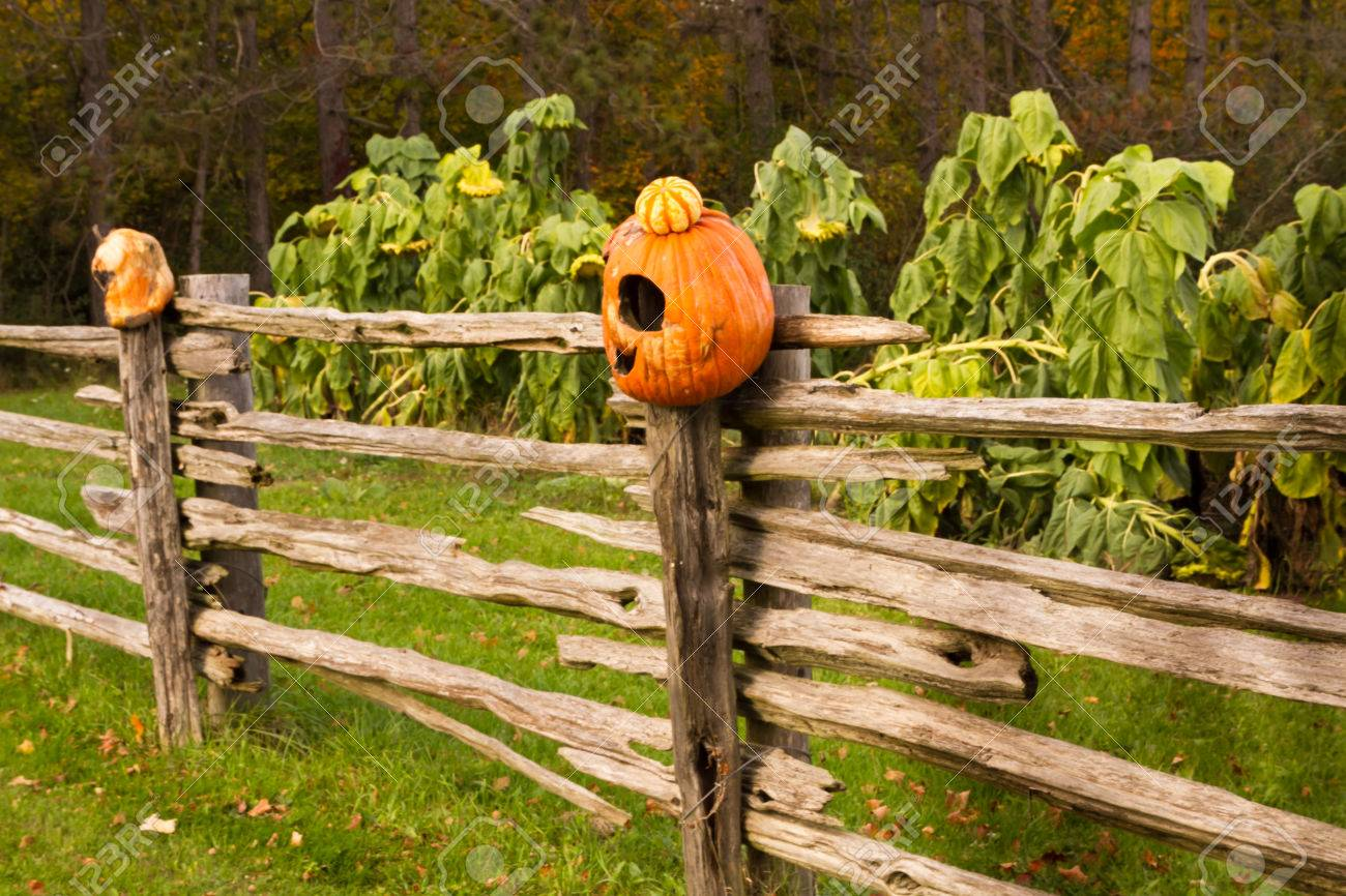 scary and old pumpkin heads on top of wooden fence posts stock photo