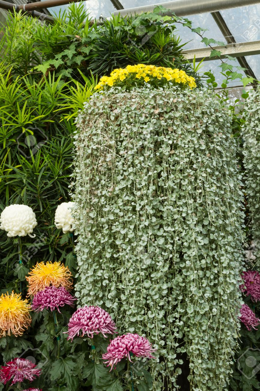 free fabulous precioso jardn con plantas colgantes y flores foto de archivo with plantas colgantes exterior resistentes with plantas colgantes de exterior - Plantas Colgantes Exterior