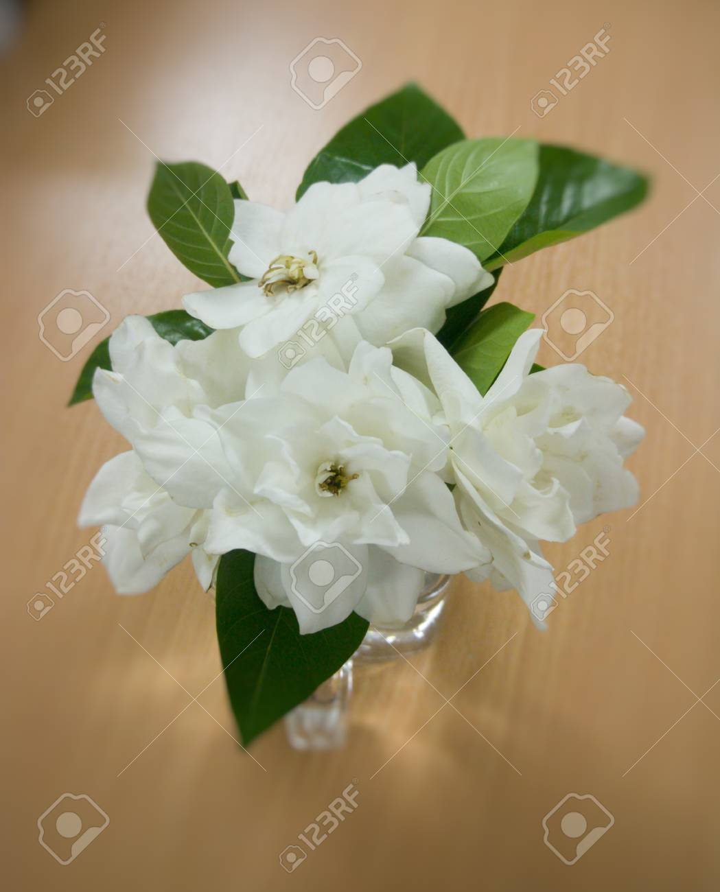 Weisse Blumen Im Glas Lizenzfreie Fotos Bilder Und Stock