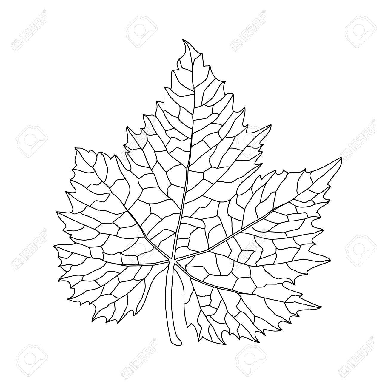 Black On White Grape Leaf Line Art Royalty Free Cliparts, Vectors ...