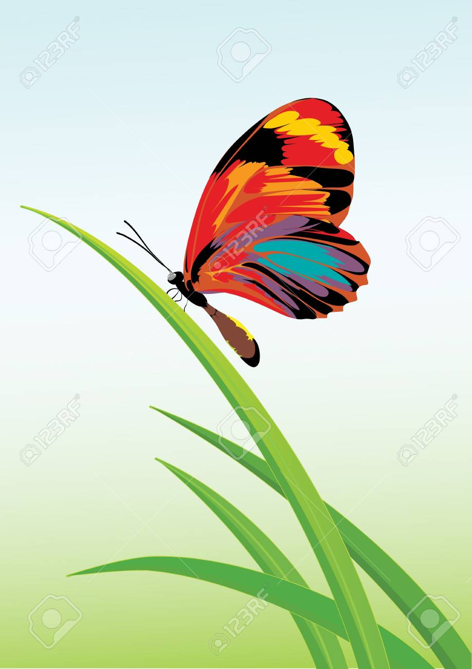 Vector illustration of a green garden background with butterfly and grasses. Stock Illustration - 3696163