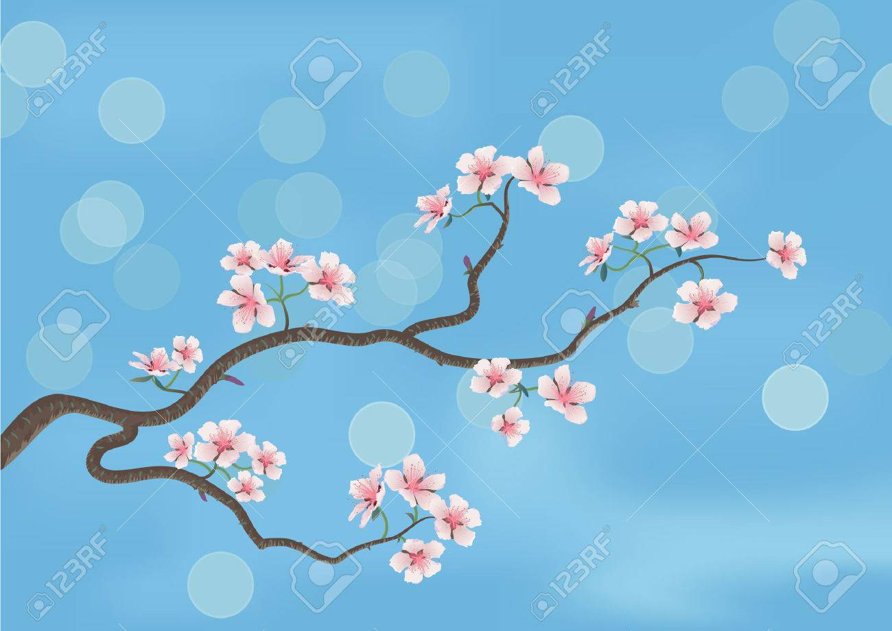 This is the illustration of a flowered sakura, japanese cherry tree Stock Vector - 3832804