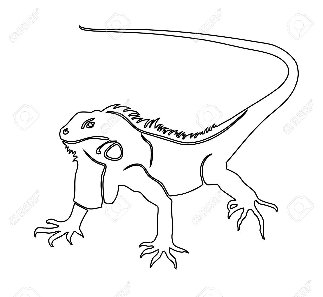 Iguana Ilustración Vectorial Para Colorear El Libro Ilustraciones ...