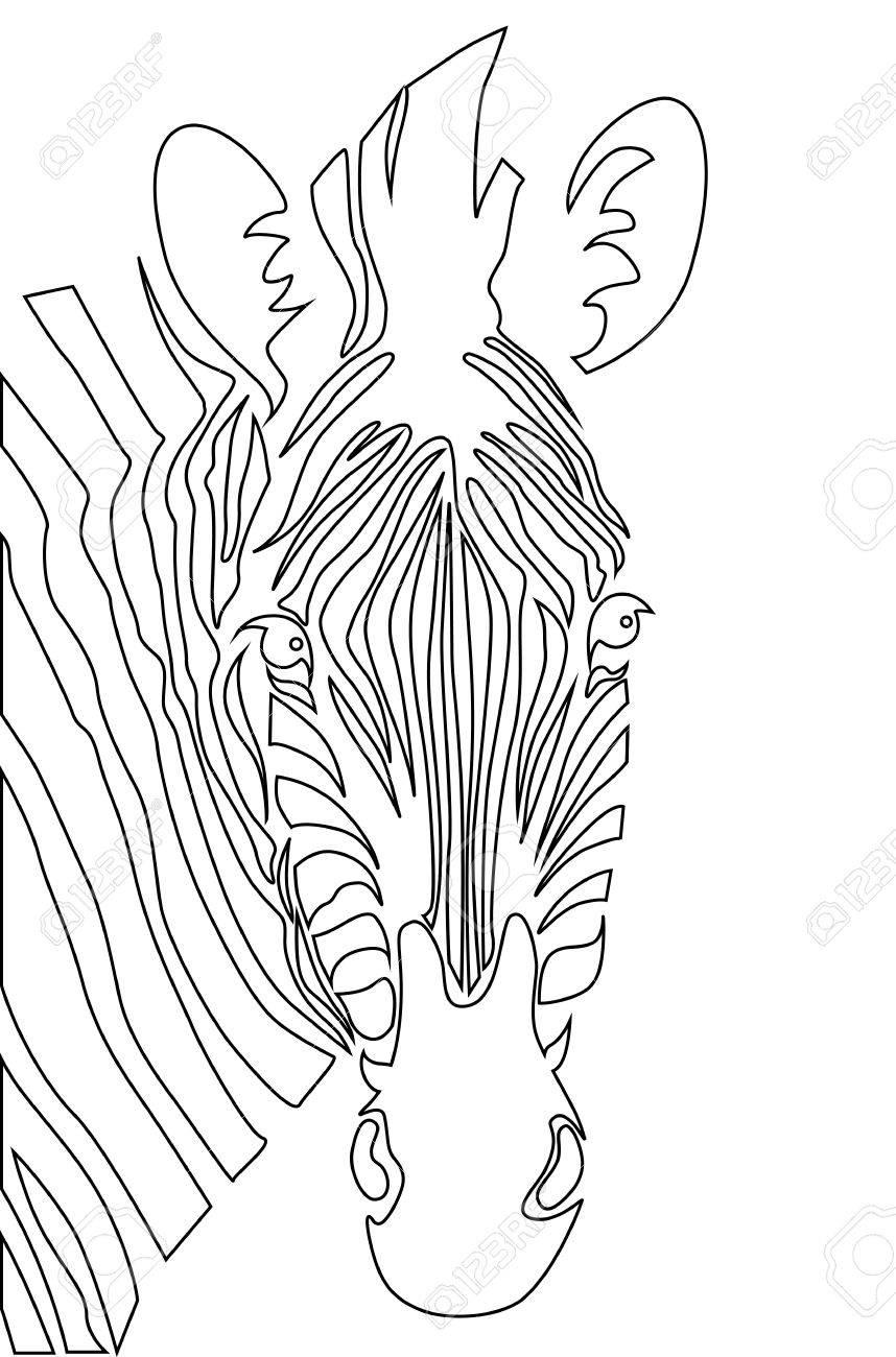 Cabeza De Cebra Ilustración Vectorial De Libro De Colorear ...