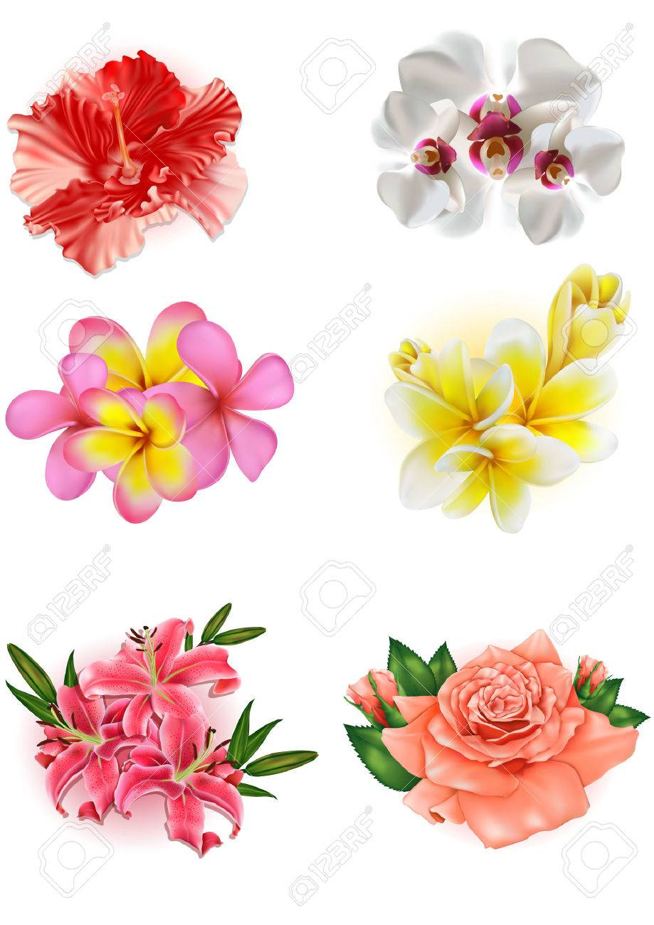 Set Of Beautiful Flowers Lily Rose Hibiscus Orchid Plumeria