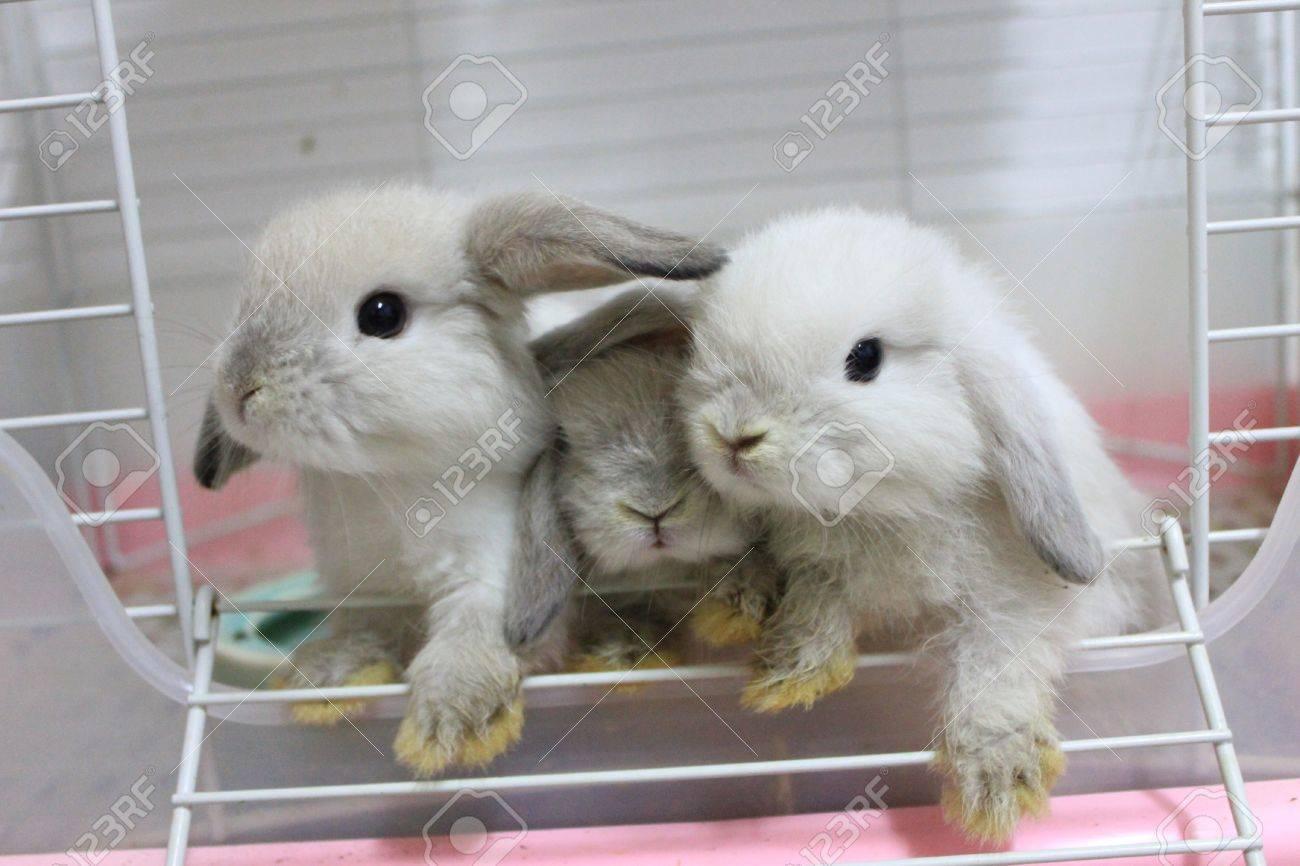 three little rabbit Stock Photo - 13697789