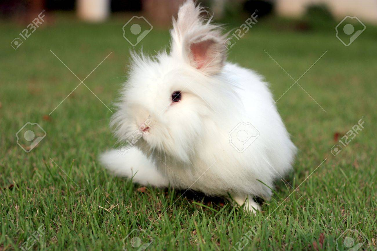 white teddy bear rabbit on the ground stock photo picture and