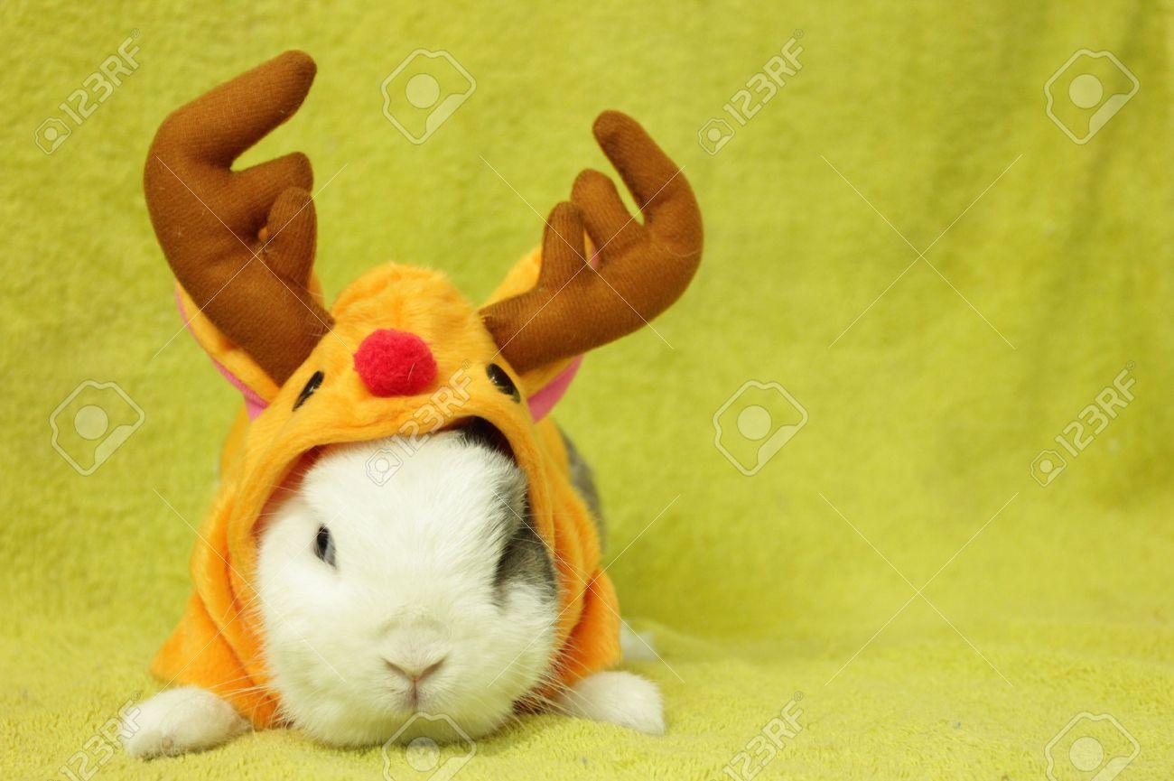 conejo en traje de reno foto de archivo