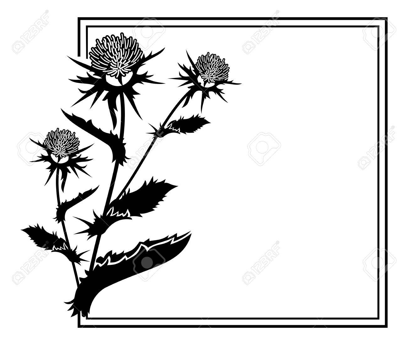 square frame with thistle silhouette vector clip art royalty free rh 123rf com thistle clipart black and white thistle clip art free