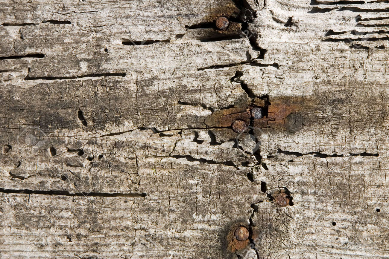 An aged wood wall with rusty nails Stock Photo - 875439
