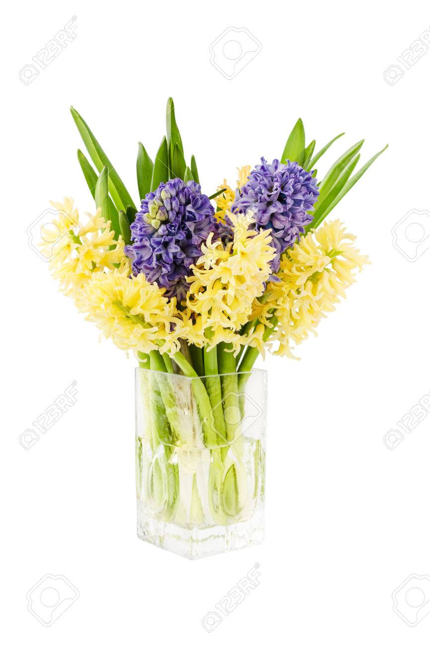 Bouquet of fresh yellow and purple hyacinth flowers in vase bouquet of fresh yellow and purple hyacinth flowers in vase isolated over white background stock dhlflorist Choice Image