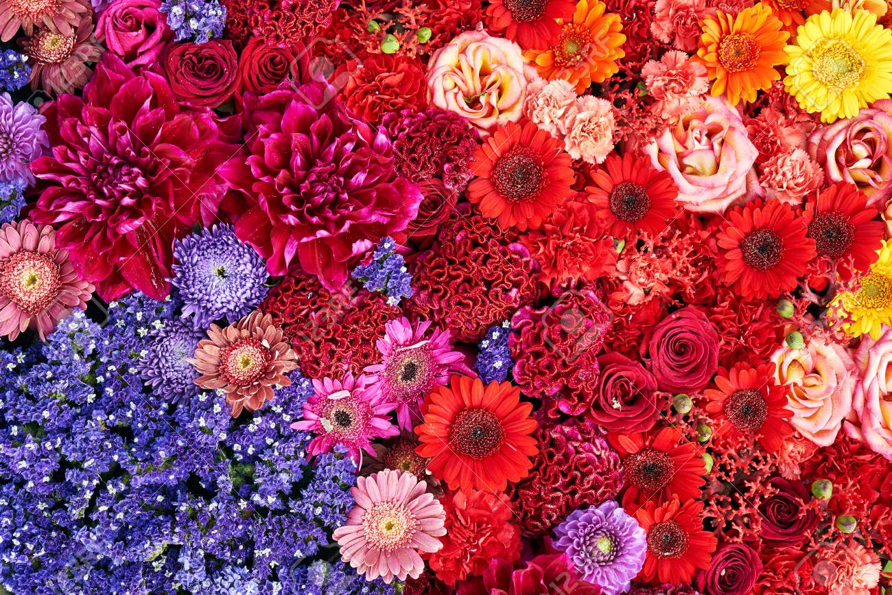 Colorful Flowers Background. Top View Stock Photo, Picture And ...