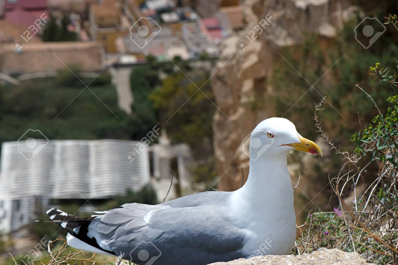 A seagull created a nest for laying eggs and raising babies on