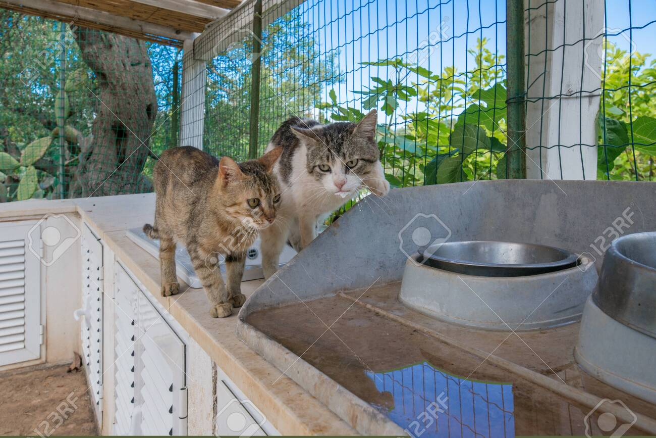 Beautiful domestic cats sitting in garden terrace, waiting for food. Cat has been rescued from stray life and is recovering. Empty bowl next to kittys. Concept of poor living conditions - 119718681