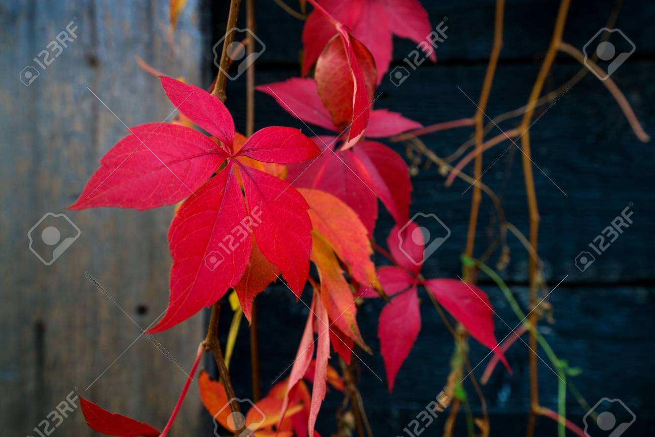 Beautiful background of colorful autumn leaves. Red, green, brown and yellow. Concept of changing seasons - 119718762