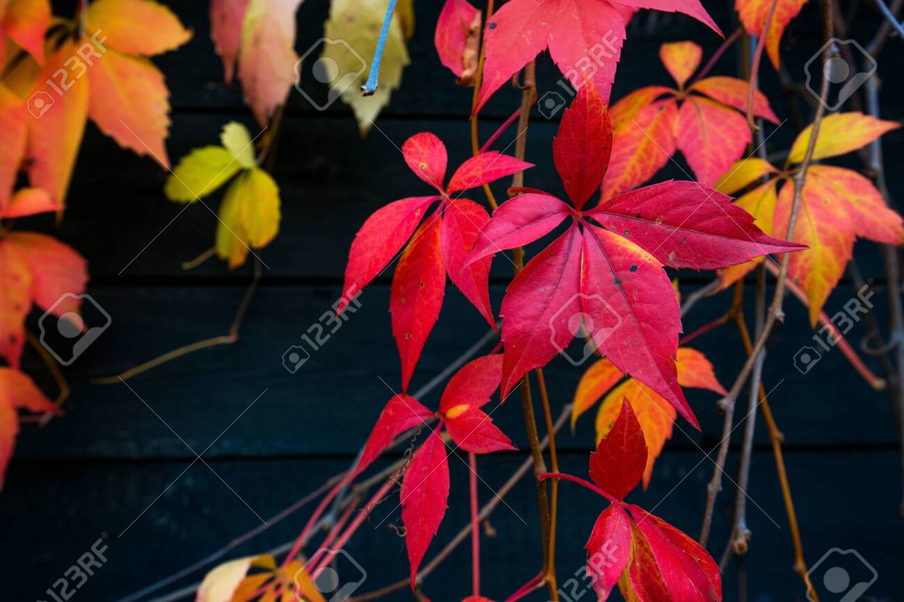 Beautiful background of colorful autumn leaves. Red, green, brown and yellow. Concept of changing seasons - 119718765