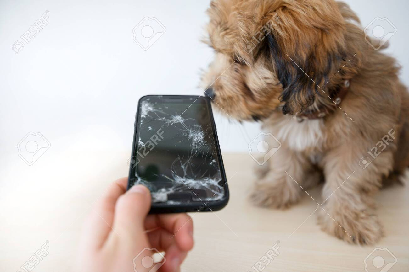 Broken and damaged smartphone with cracks on glass screen next to disobedient puppy. Accident. Dog has ruin and bitten the cell phone. Concept of warranty and lost smartphone - 119718792