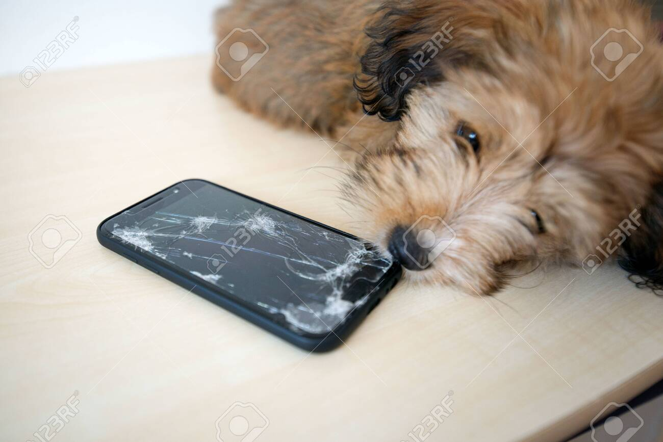 Broken and damaged smartphone with cracks on glass screen next to disobedient puppy. Accident. Dog has ruin and bitten the cell phone. Concept of warranty and lost smartphone - 119718793