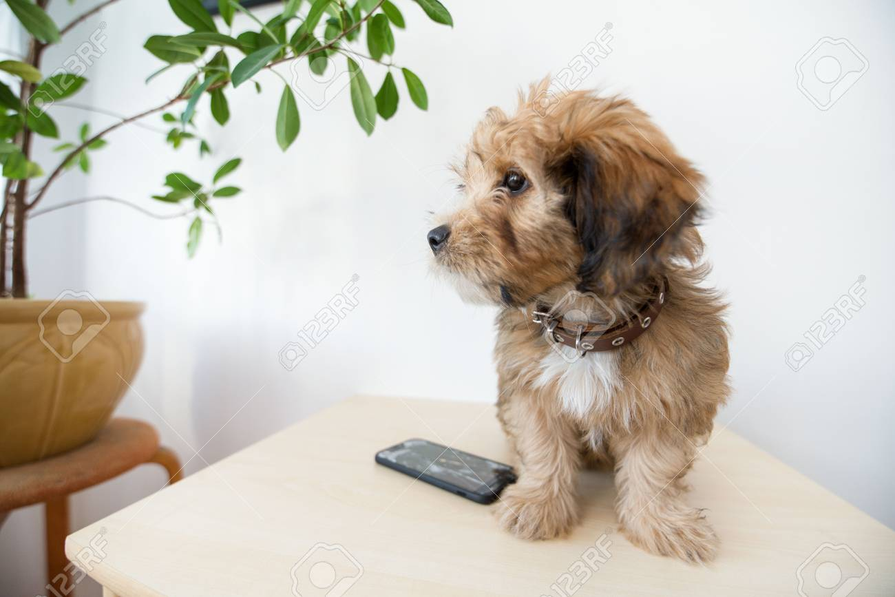 Broken and damaged smartphone with cracks on glass screen next to disobedient puppy. Accident. Dog has ruin and bitten the cell phone. Concept of warranty and lost smartphone - 119718796