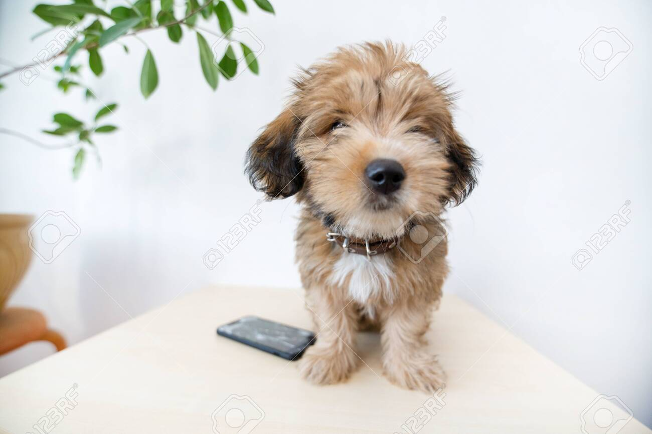 Broken and damaged smartphone with cracks on glass screen next to disobedient puppy. Accident. Dog has ruin and bitten the cell phone. Concept of warranty and lost smartphone - 119718797