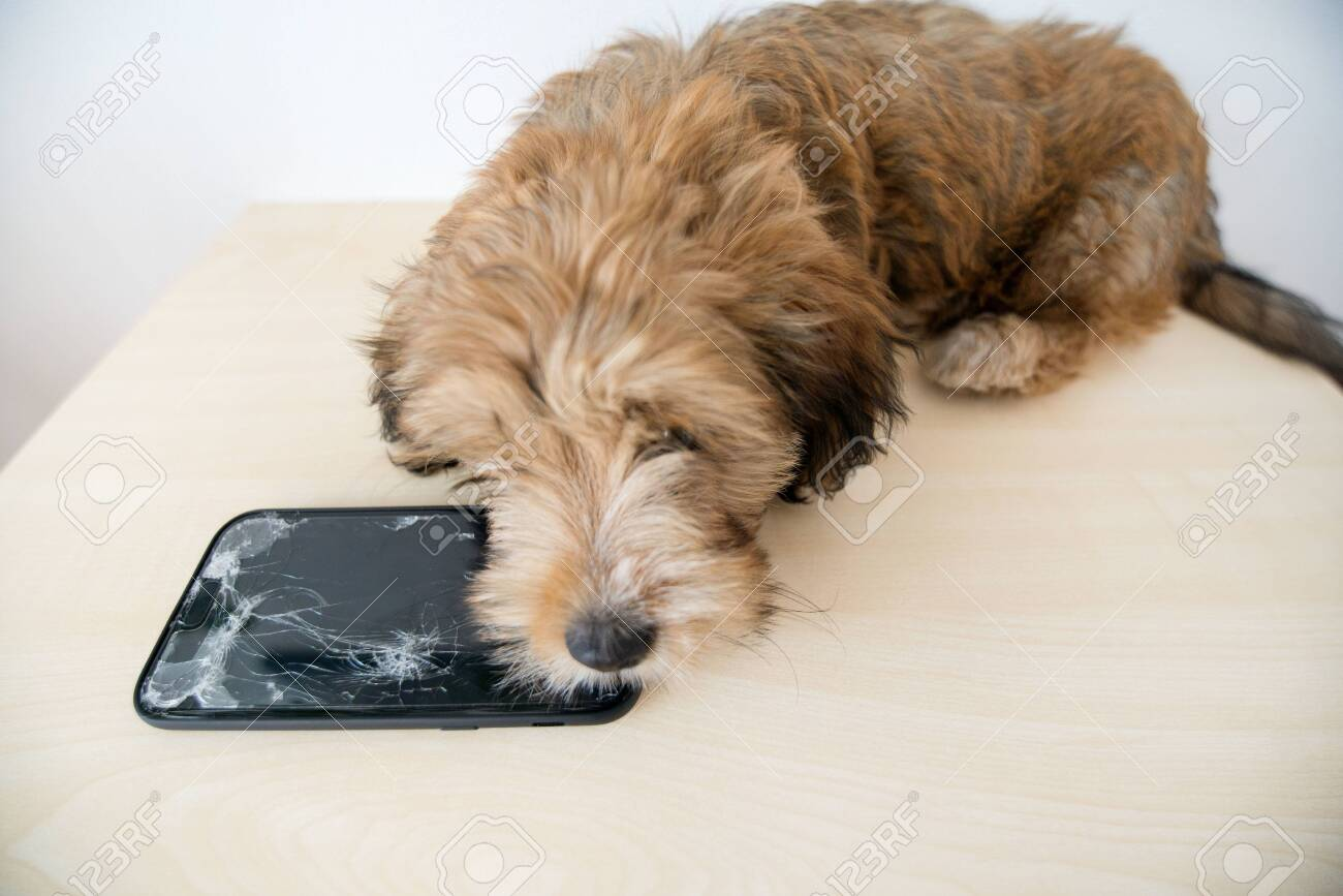 Broken and damaged smartphone with cracks on glass screen next to disobedient puppy. Accident. Dog has ruin and bitten the cell phone. Concept of warranty and lost smartphone - 119718802