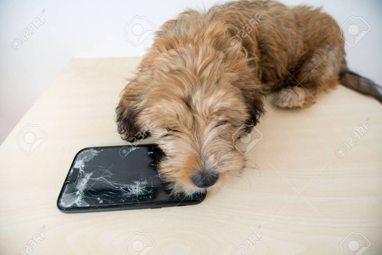 Broken and damaged smartphone with cracks on glass screen next to disobedient puppy. Accident. Dog has ruin and bitten the cell phone. Concept of warranty and lost smartphone - 119718813