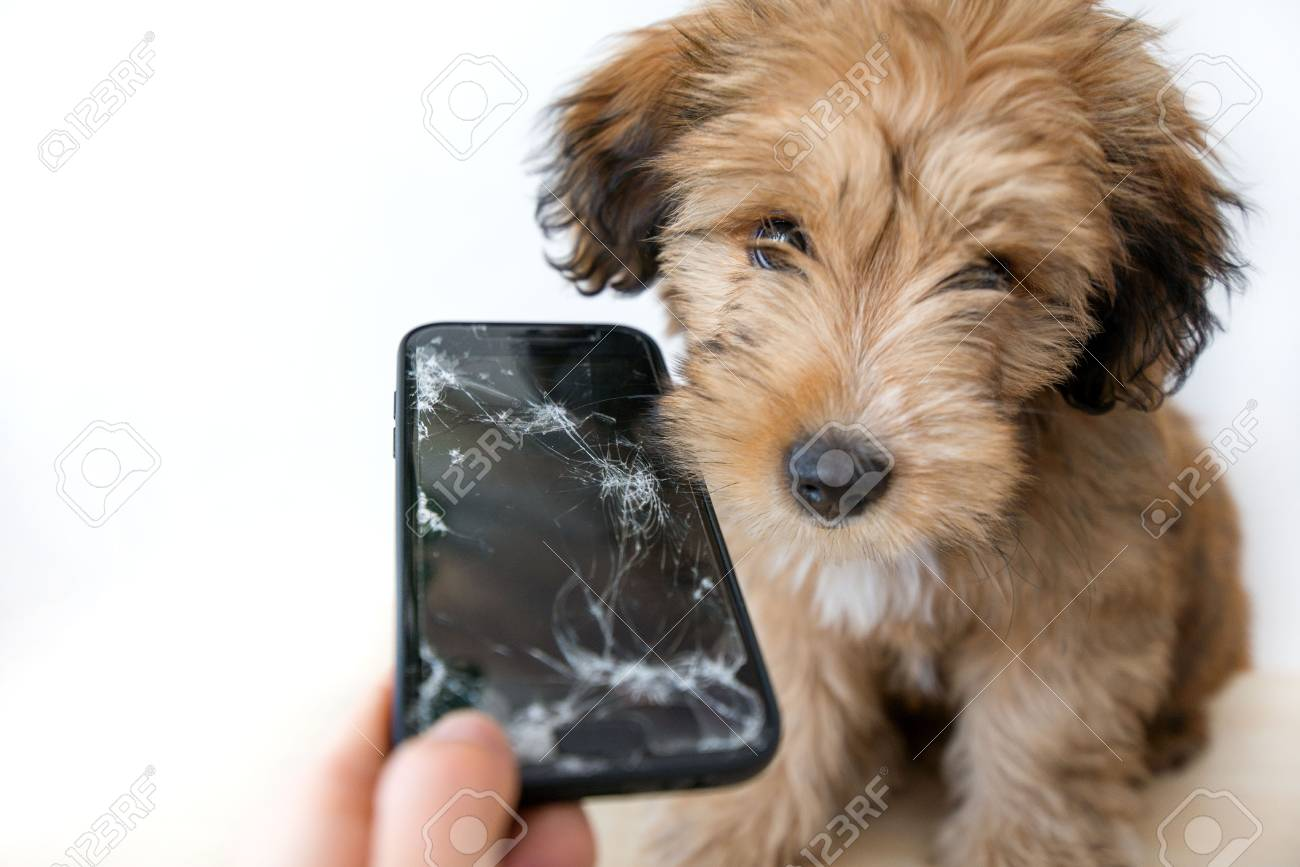 Broken and damaged smartphone with cracks on glass screen next to disobedient puppy. Accident. Dog has ruin and bitten the cell phone. Concept of warranty and lost smartphone - 119718824