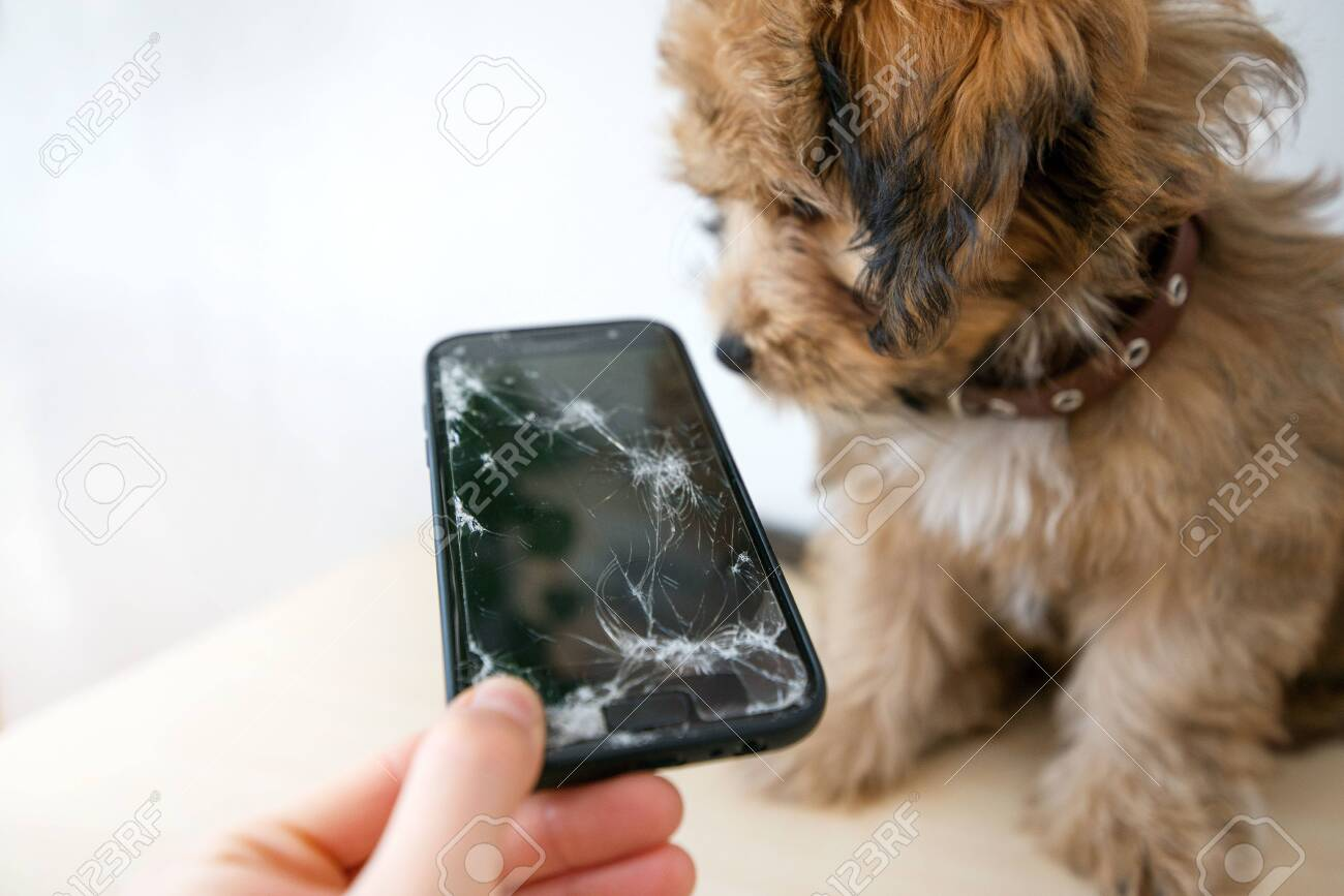 Broken and damaged smartphone with cracks on glass screen next to disobedient puppy. Accident. Dog has ruin and bitten the cell phone. Concept of warranty and lost smartphone - 119718826