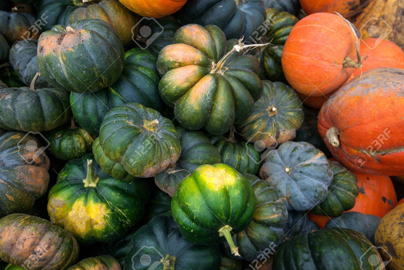 Trailer full of fresh pumpkins. Rich harvest in autumn or fall on farm in November. Beautiful, colorful autumn background. Preparing for Halloween. Delicious and healthy vegetables and fruits. - 119718903