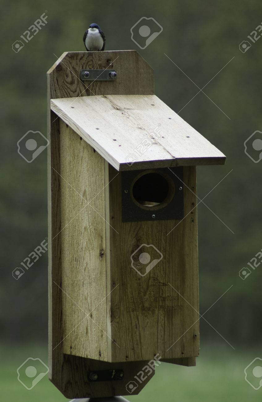 A tree swallow on a wood duck nest box perhaps the swallow stock a tree swallow on a wood duck nest box perhaps the swallow wanted a mansion publicscrutiny Choice Image