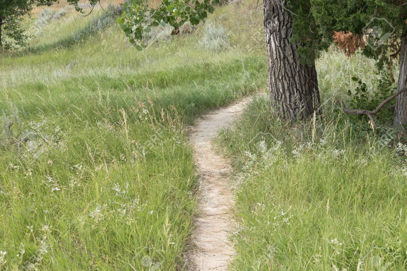 f65954c8f751 A Bison (Buffalo) Trail Passes Through The Grassland
