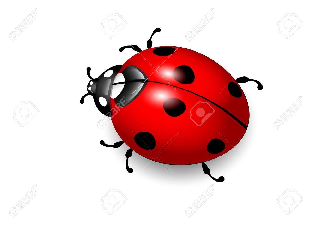Ladybird Vector illustration of ladybug on white background Eps10 - 13187467