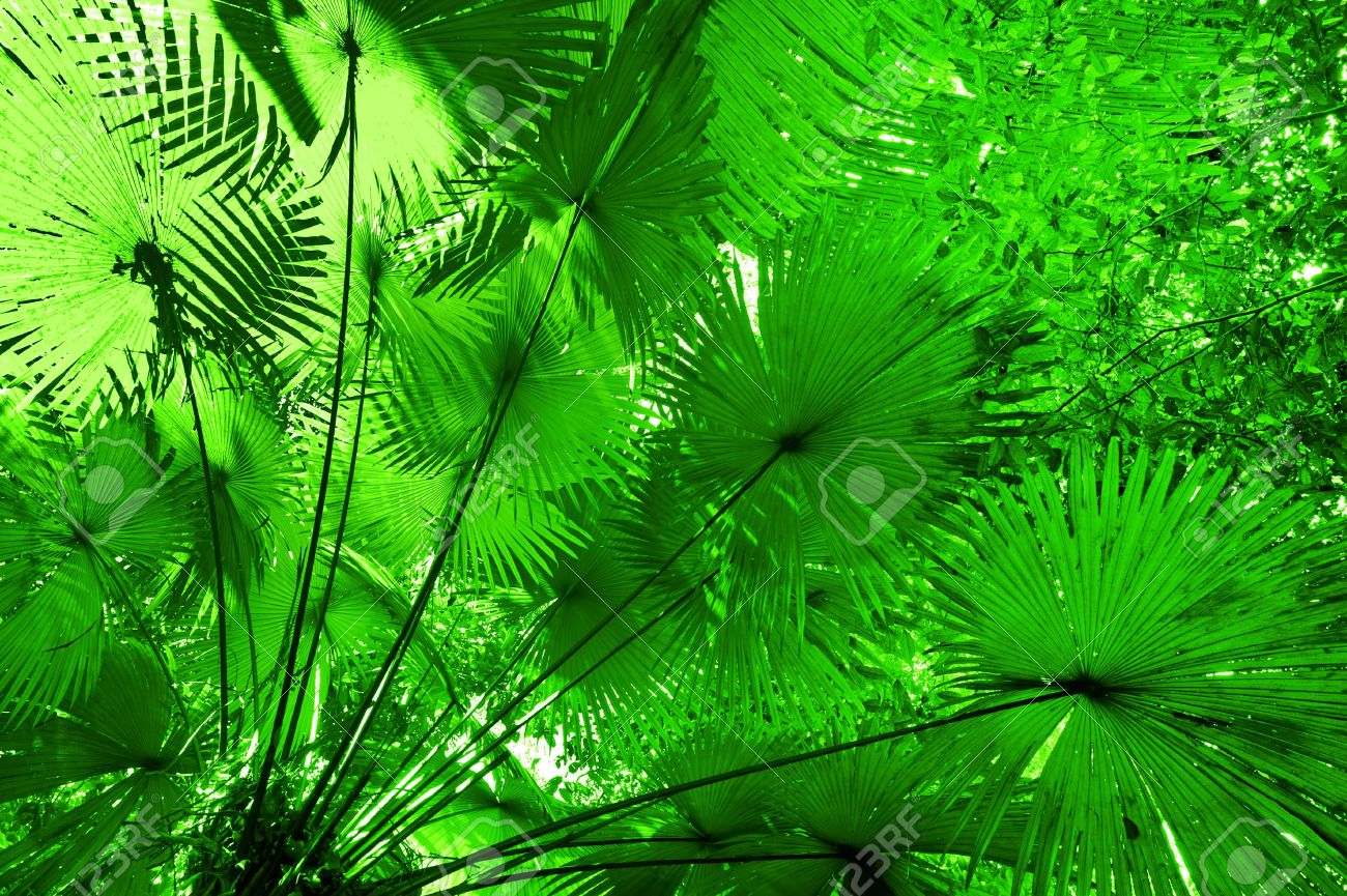 Jungle Forest Background Plant Leaves In Tropical Rainforest Stock Photo Picture And Royalty Free Image Image 19050132 The plants and trees in the rainforest grow to different heights. jungle forest background plant leaves in tropical rainforest