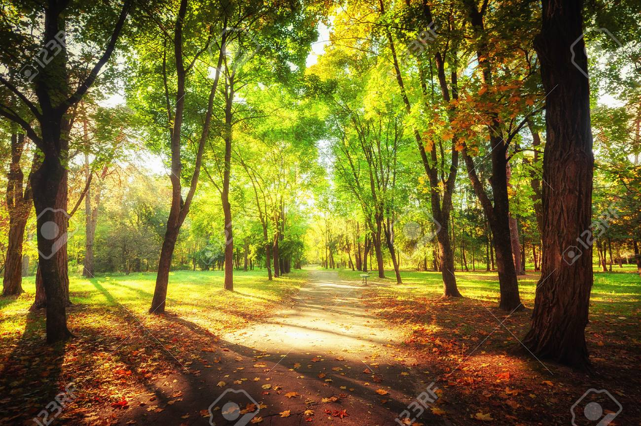 Sunny Day In Outdoor Park With Colorful Autumn Trees And Pathway ...