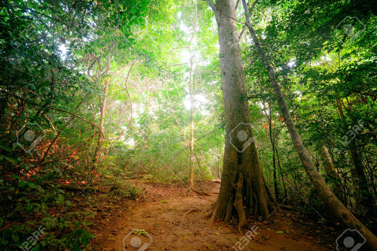 Fantasy Tropical Jungle Forest Landscape With Road Path Way Stock