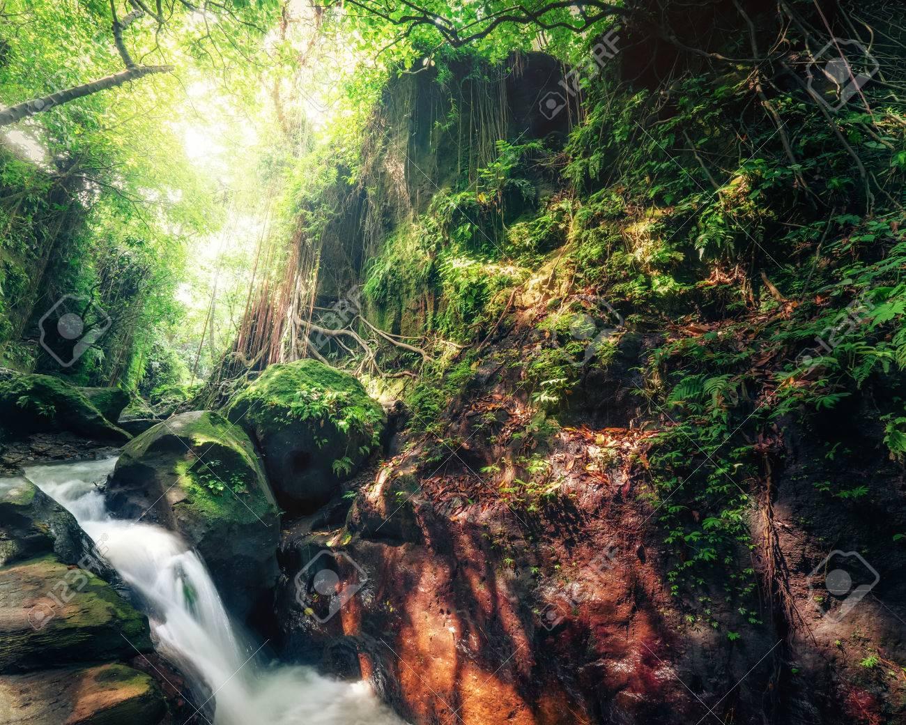 Verwonderend Indonesië Wilde Jungles. Verbazend Mysterie Regenwoud Landschap EQ-59
