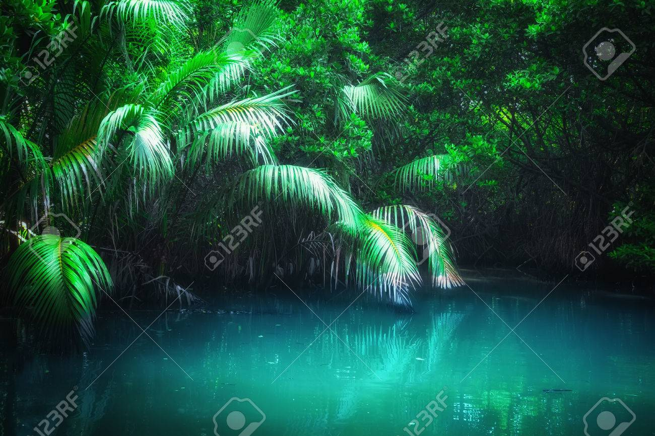 Fantasy jungle landscape of turquoise tropical lake in mangrove rain forest. Sri Lanka nature and travel destinations - 62819440