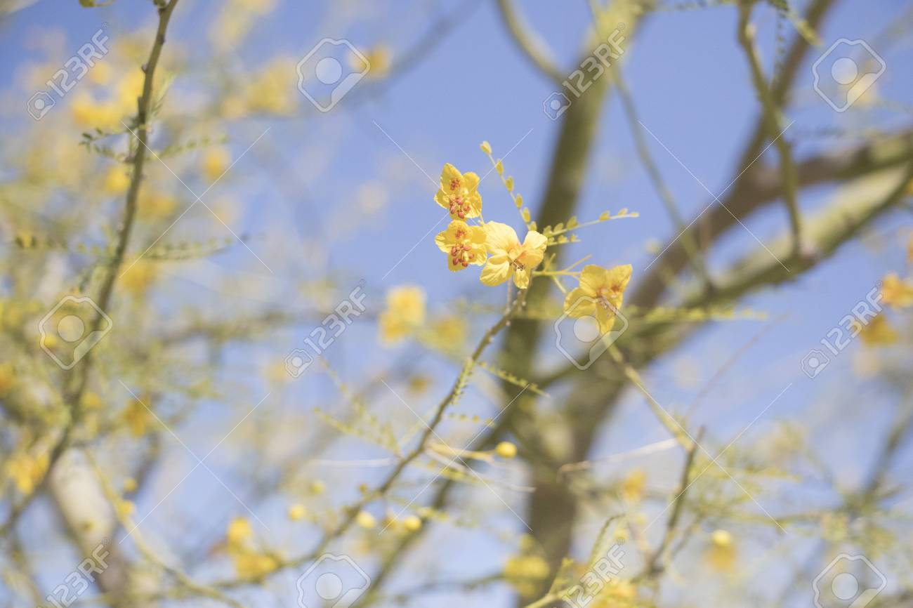 Closeup Of Tiny Yellow Flowers Growing On Tree Branches Stock Photo