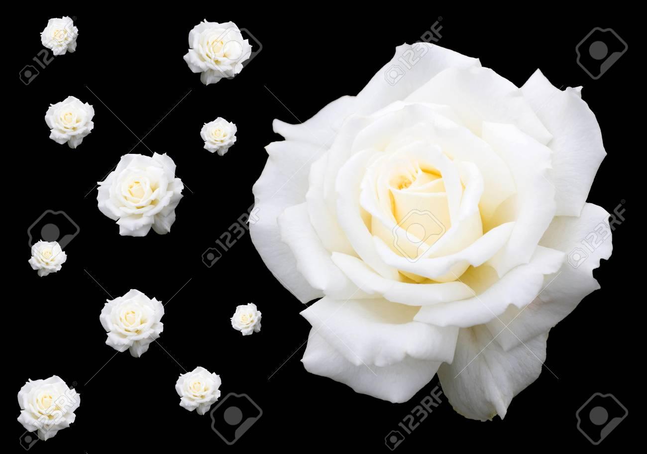 Sfondo Rose Bianche