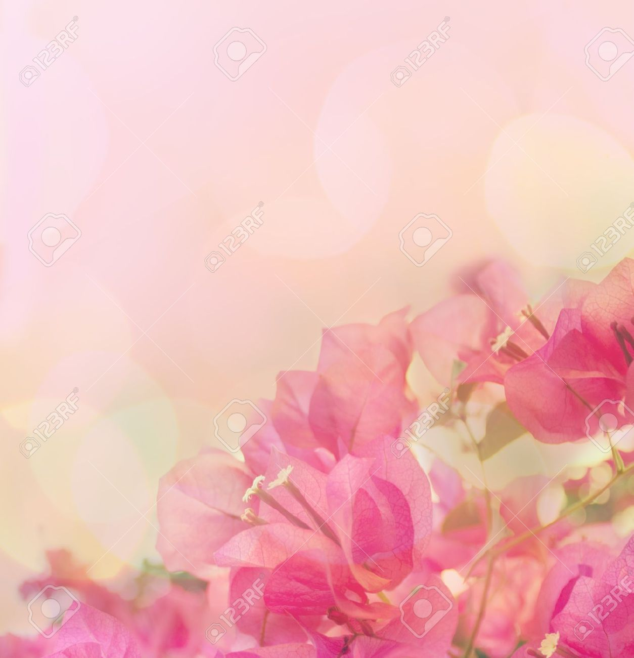 Beautiful Abstract Floral Background With Pink Flowers Border